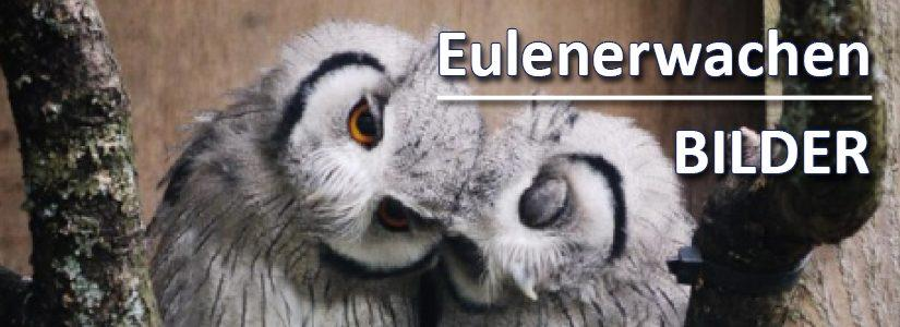 1. HCLG-Eulenerwachen